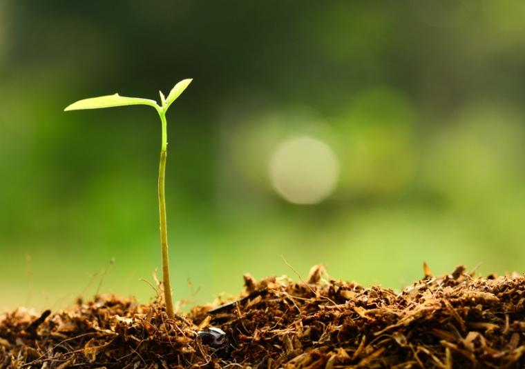 greener-future-plant